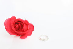 Red rose with ring on white background Stock Image