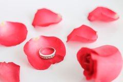 Red rose with ring on white background Stock Photos