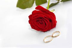 Red rose with rings. Isolated on white Stock Photography
