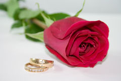 Red rose and rings. Stock Photos
