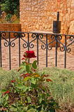 A red rose in Ronda Royalty Free Stock Photo