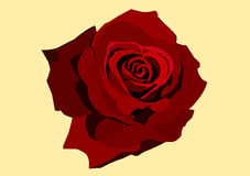 Red Rose. Roses are the flowers are fragrant.The red rose represents true love Stock Image