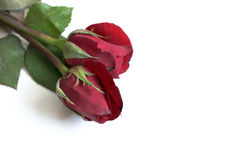 Red Rose. S under a white background Royalty Free Stock Photography
