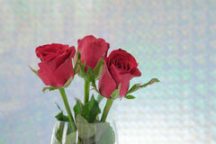 Red rose. S in vase white  background Royalty Free Stock Image