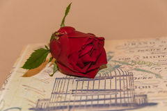 Red rose. Roses on a wooden retro box Stock Image