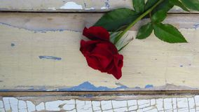 Red rose on rustic style wood background. Old wood texture with peeling blue and white paint. Natural red rose on rustic style wood background. Old wood texture royalty free stock images