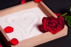 Red rose and sand box. Single red rose blossom, on a wooden box holding white sand royalty free stock images