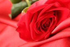 Red rose on satin background Royalty Free Stock Images