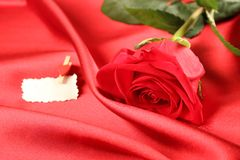Red rose on satin background Stock Photos