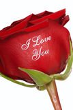 Red Rose that says I Love You. Romantic Red Rose that says I Love You written on it Royalty Free Stock Images