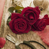 Red rose and scissors, retro colors Stock Images