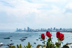Red rose and sea views of Pattaya. royalty free stock photo