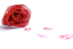 Red rose with several lipstick kisses Stock Photos