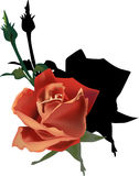 Red rose with shadow on white. Illustration with red rose flower Stock Illustration