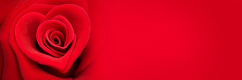Red rose in the shape of a heart, valentines day banner. Red rose in the shape of a heart, valentines day web banner stock photography