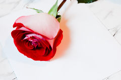 Red rose and a sheet of paper Stock Images