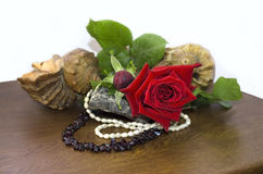 Red rose with shells and beads of garnet and pearls Royalty Free Stock Photo