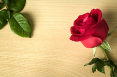 Red rose side on wood and green leaves Stock Image
