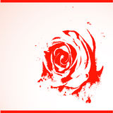 Red rose Royalty Free Stock Image