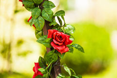 Red rose. Red silk rose Stock Photography