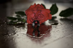 Red Rose and Silver Ring Stock Images