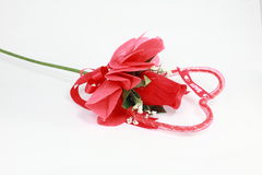 Red rose. A single red rose on a white background Stock Images
