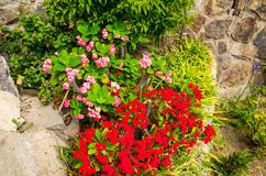 Red and rose small flowers with green leaves and grass on stone royalty free stock images