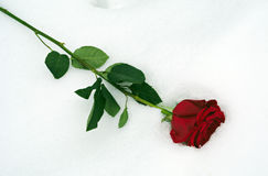 Red rose in snow Royalty Free Stock Image
