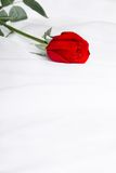 Red rose on soft fabric royalty free stock photo