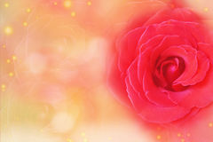 Red rose on a soft orange and red blurred bokeh background for Valentine& x27;s Day. Royalty Free Stock Photography