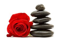 Red rose and spa black stones. Isolated on white background Royalty Free Stock Photography