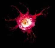 Red rose splashes Royalty Free Stock Image