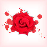 Red rose with splashes vector illustration