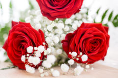 Red Rose. St. Valentine s Day Royalty Free Stock Photo