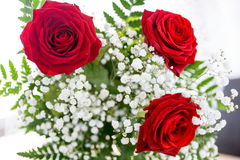 Red Rose. St. Valentine s Day Royalty Free Stock Images