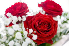 Red Rose. St. Valentine s Day Stock Images
