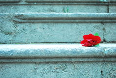 Red rose stairs Royalty Free Stock Photo