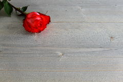 Red Rose with Stalk and Leaves on wood Background Stock Photos