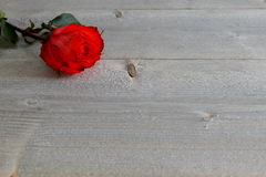 Red Rose with Stalk and Leaves on wood Background Royalty Free Stock Photos