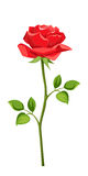 Red rose with stem isolated on white. Vector illustration. Royalty Free Stock Images