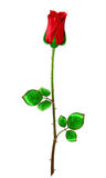 Red rose with stem and leaves on a white background. Stock Photo