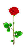 Red rose with stem and leaves on a white background.Vector illus Royalty Free Stock Photography