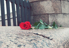 Red rose on a stone curb Stock Image