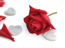 Red rose with stone heart Stock Image