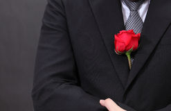 Red rose in suit. Stock Images