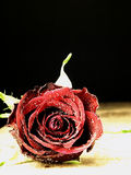 Red rose on the table and dew drops. Stock Photo