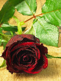 Red rose on the table and dew drops. Stock Photos
