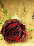 Red rose on the table and dew drops. Royalty Free Stock Image