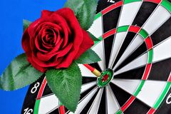 Red rose and a target for the sport of Darts. Rose flower Queen - a symbol of love and passion, decoration of the ceremonies of. The holiday. Darts game stock photos