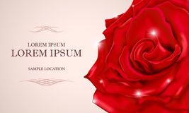 Red rose with text on a card or invitation. Vector illustration Royalty Free Stock Photography